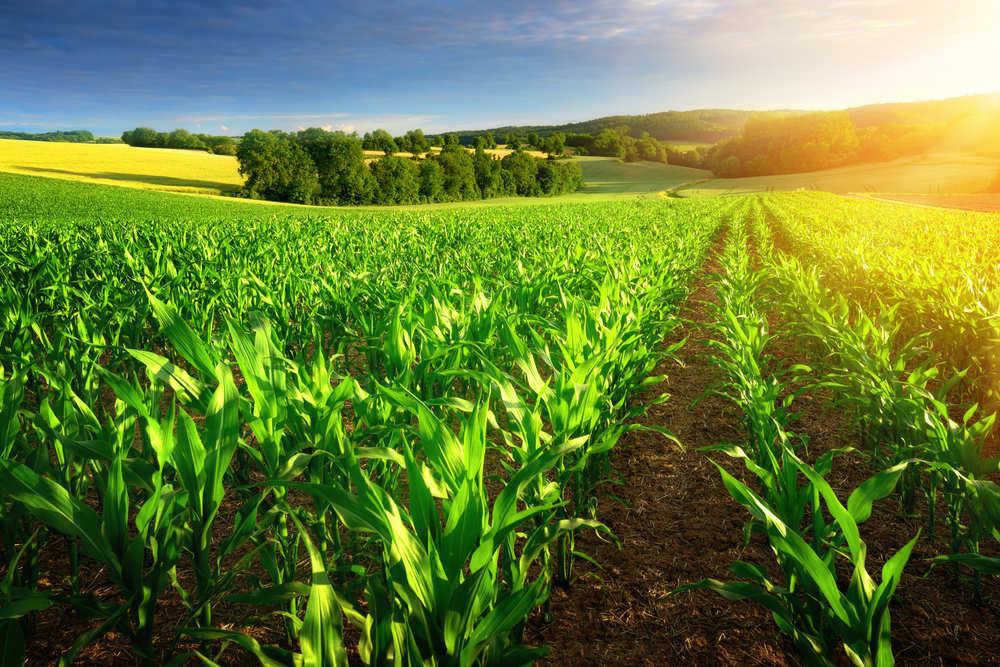 Origen y calado de la agricultura ecológica