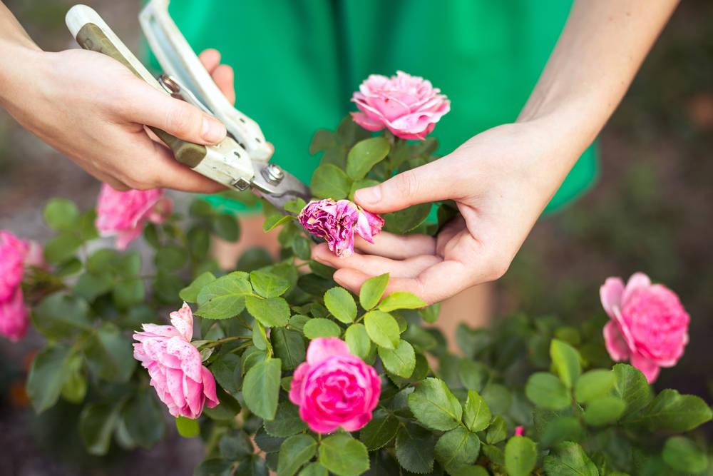 Evita la presencia de insectos en tu jardín