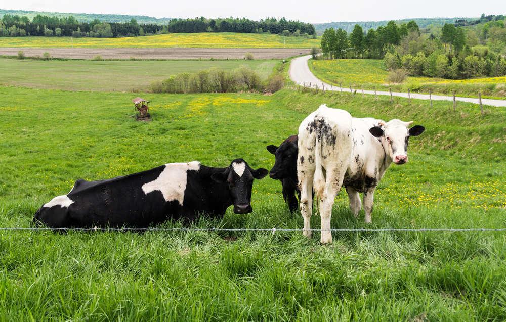 Diferencias entre ganadería intensiva y extensiva