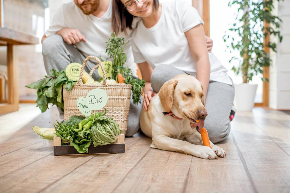 Productos ecológicos para las mascotas de hoy en día