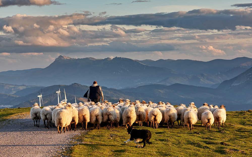 ¿Qué haría el pastor de ovejas sin su perro?