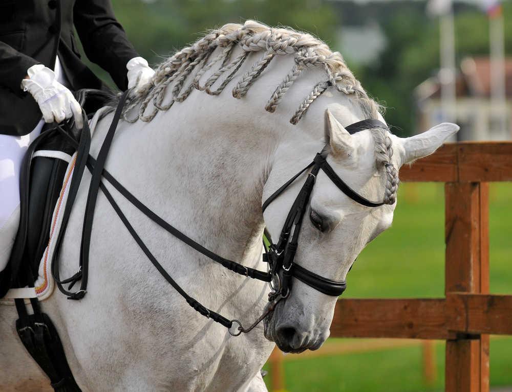 El caballo español